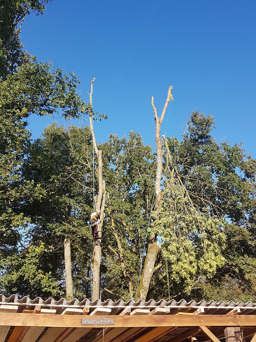 élagage sur grands arbres à Macon