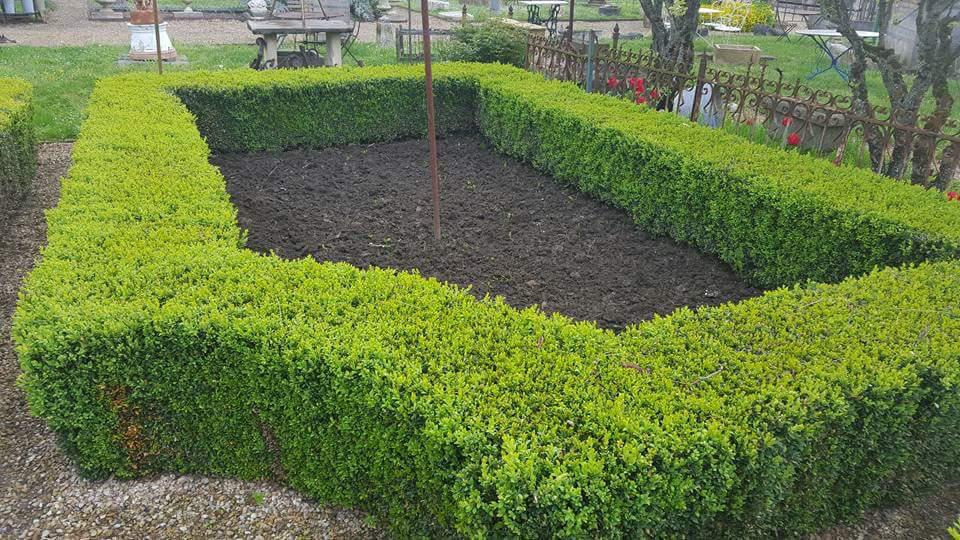 taille de buis dans jardin à la francaise 2